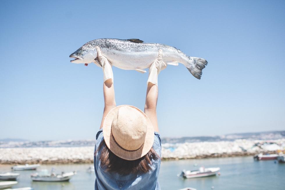 comida crua, salmão, peixe, peixe fresco, sessão fotográfica, food art