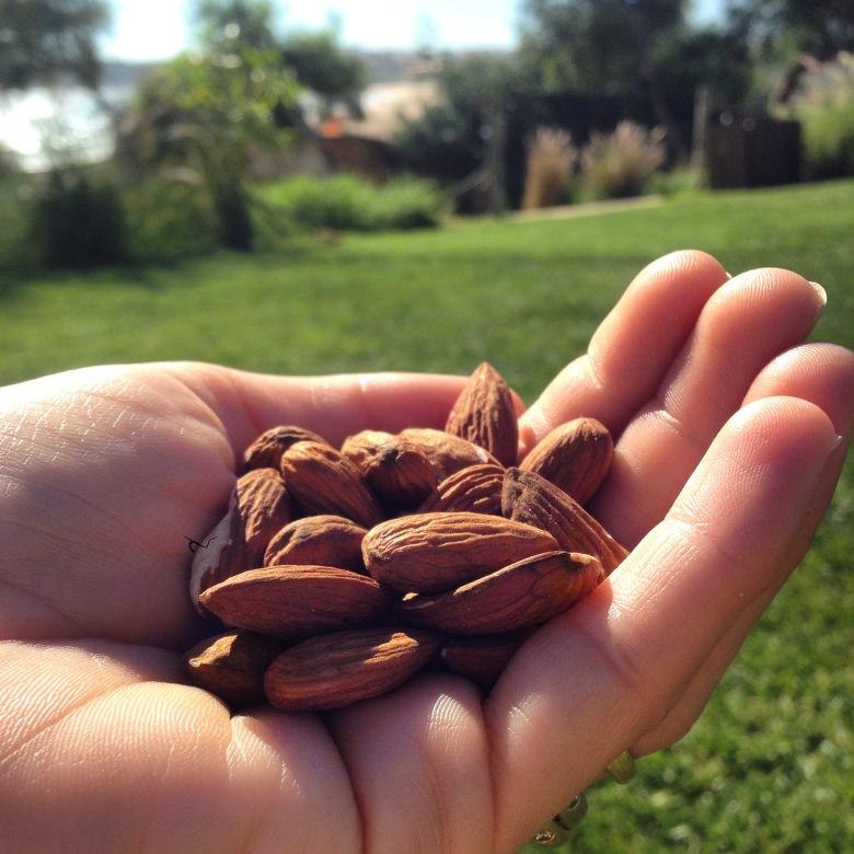 Amendoas - snack @ cru com pinta